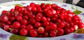 hvordan lage tyttebærsyltetøy