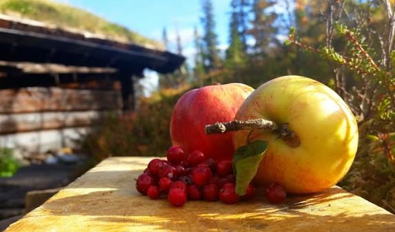 Tyttebærsyltetøy med epler