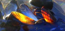 Spicy blåskjellsuppe